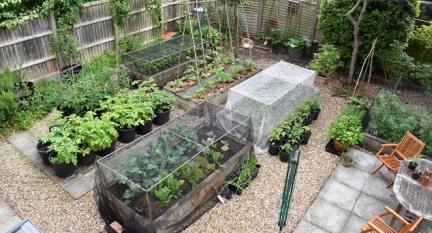 marks veg plot